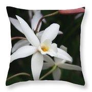 White Beauty Dove Throw Pillow