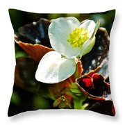 White Begonia At Pilgrim Place In Claremont-california  Throw Pillow
