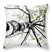 White Birch 2011-1a Throw Pillow