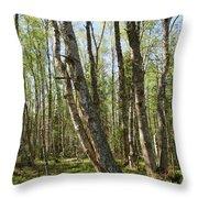 White Birch Forest Throw Pillow