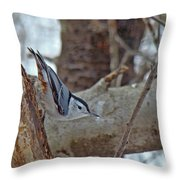 White Breasted Nuthatch - Sitta Carolinensis Throw Pillow