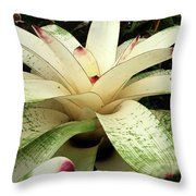 White Bromeliad Throw Pillow