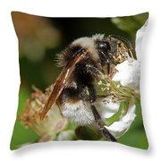 White Bumblebee Throw Pillow