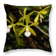 White Butterfly Orchid Throw Pillow