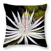 White Cactus Flower Throw Pillow
