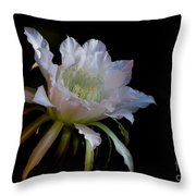 White Cactus Glory  Throw Pillow