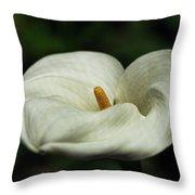 White Calla Lilly  Throw Pillow