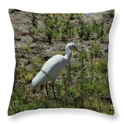White Cattle Egret Throw Pillow