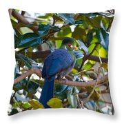 White-cheeked Turaco Throw Pillow