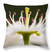 White Cherry Blossom Against Green Throw Pillow