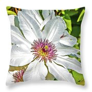 White Clematis Yellow And Purple Throat Throw Pillow