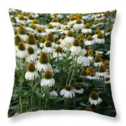 White Coneflower Field Throw Pillow
