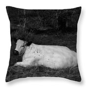 White Cow Luxuriates Throw Pillow