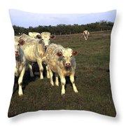 White Cows Throw Pillow