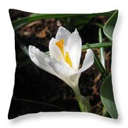 White Crocus Throw Pillow