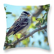 White-crowned Sparrow 0033-111017-1cr Throw Pillow