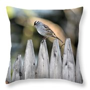 White-crowned Sparrow 3 Throw Pillow