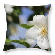 White Dogwood Throw Pillow