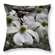 White Dogwood Throw Pillow