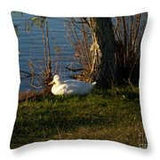 White Duck Resting Throw Pillow