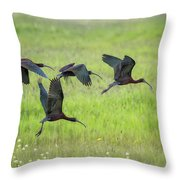 White-faced Ibis Rising, No. 2 Throw Pillow