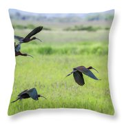 White-faced Ibis Rising, No. 3 Throw Pillow