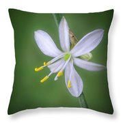 White Flower Throw Pillow by Lynn Geoffroy