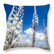 White Flowering Sea Squill On A Blue Sky Throw Pillow