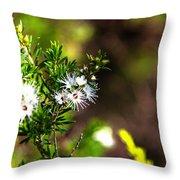 White Flowers Of Kunzea Ambigua Throw Pillow
