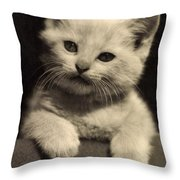 White Fluffy Kitten Throw Pillow
