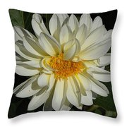 White Gerbera Throw Pillow