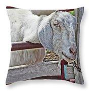 White/grey Goat Head Through Fence 2 6242018 Goat 2420.jpg Throw Pillow
