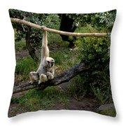 White Handed Gibbon 1 Throw Pillow