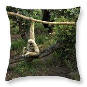 White Handed Gibbon 2 Throw Pillow