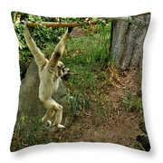White Handed Gibbon 3 Throw Pillow