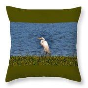 White Heron Throw Pillow