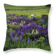 White Horse In A Lupine Field Throw Pillow