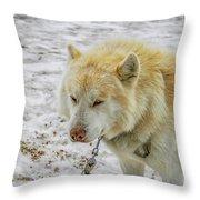 White Huskie Throw Pillow