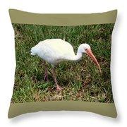 American White Ibis Bird Throw Pillow