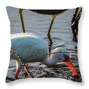White Ibis Eating Throw Pillow