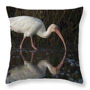 White Ibis Feeding In Morning Light Throw Pillow