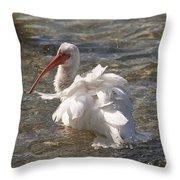 White Ibis In Florida Throw Pillow