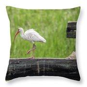 White Ibis Stepping Out Throw Pillow
