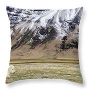 White Icelandic Horse Throw Pillow