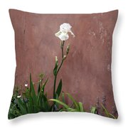 White Iris In New Mexico Throw Pillow