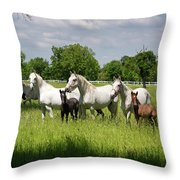 White Lipizzaner Mares Horse Breed With Dark Foals Grazing In A  Throw Pillow