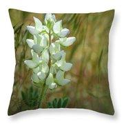 White Lupin Lupinus Albus Throw Pillow