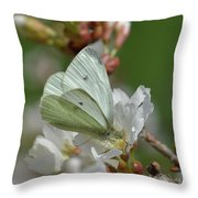 White Moth On Blossom Throw Pillow