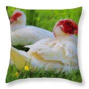 White Muscovy Ducks Throw Pillow