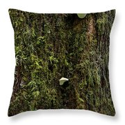 White Mushrooms - Quinault Temperate Rain Forest - Olympic Peninsula Wa Throw Pillow